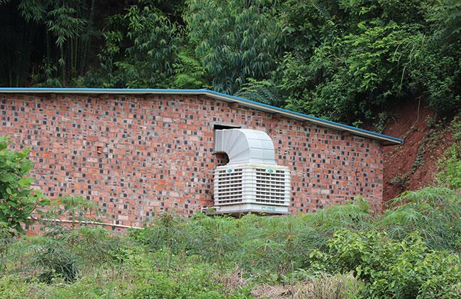 种母猪也需要冷风机来进行降温改善环境