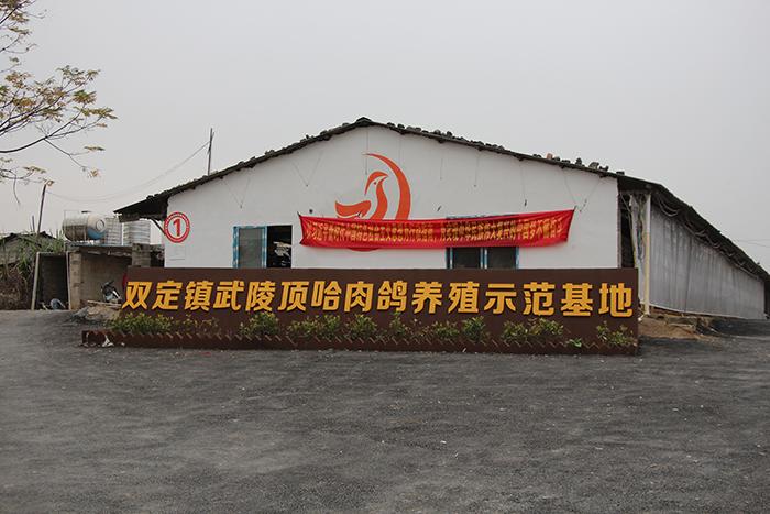 双定镇武陵顶哈肉鸽养殖示范基地