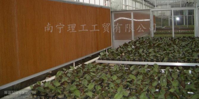花卉大棚降温用水帘墙,广西水帘批发