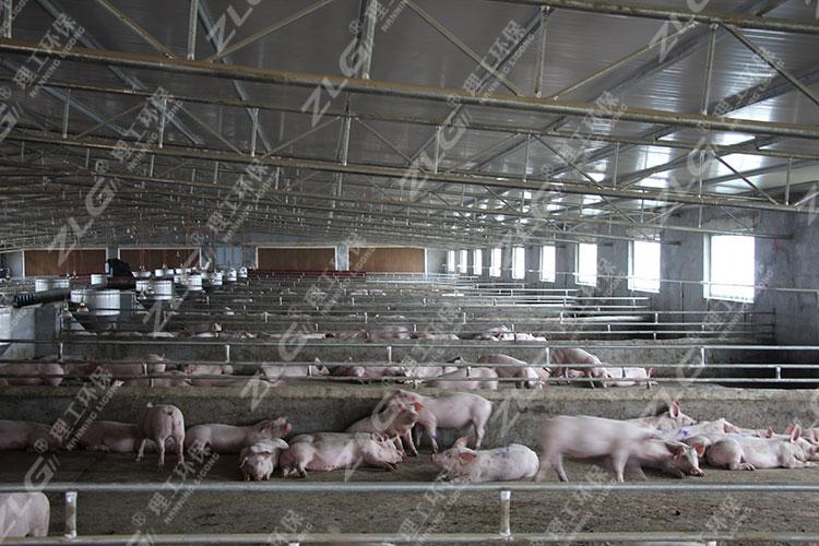 养猪场水帘降温