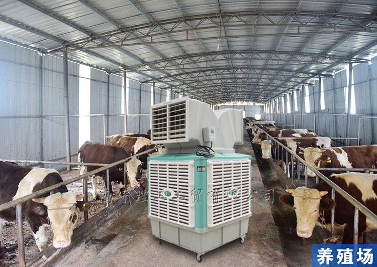 养殖场工业冷风机
